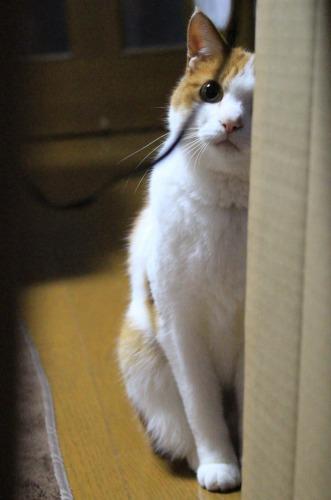 ブログNo.599(首をかしげる猫)14