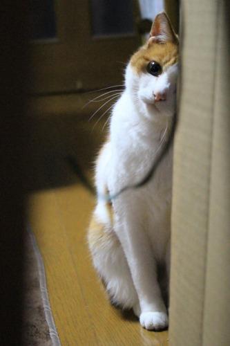 ブログNo.599(首をかしげる猫)15