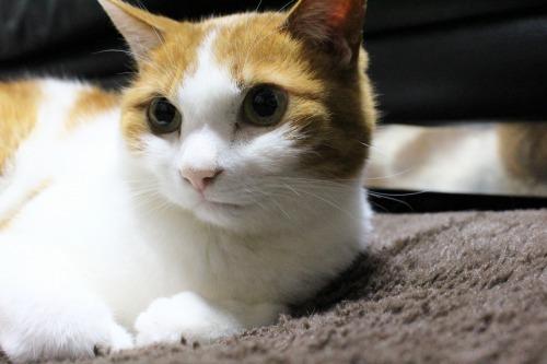 ブログNo.605お休み(ぐで猫)1