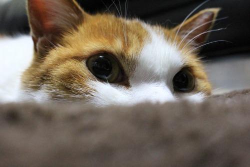 ブログNo.605お休み(ぐで猫)3