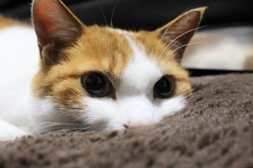ブログNo.605お休み(ぐで猫)4
