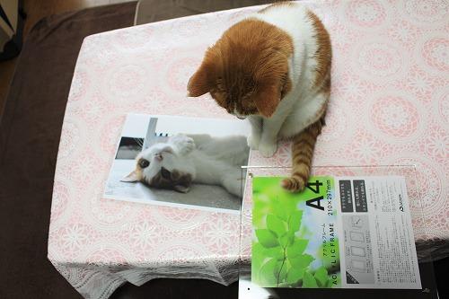 ブログNo.614(週刊誌FLASH掲載で頂いた写真)4