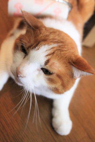 ブログNo.618(コロコロ猫)5