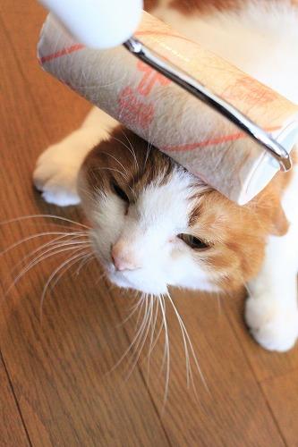 ブログNo.618(コロコロ猫)6
