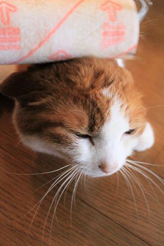 ブログNo.618(コロコロ猫)8