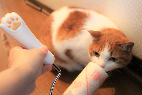 ブログNo.618(コロコロ猫)12