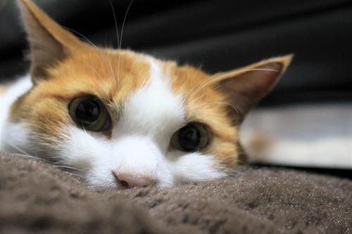 ブログNo.621(ペロペロしてる時の猫に指を出すとどうなる?)2