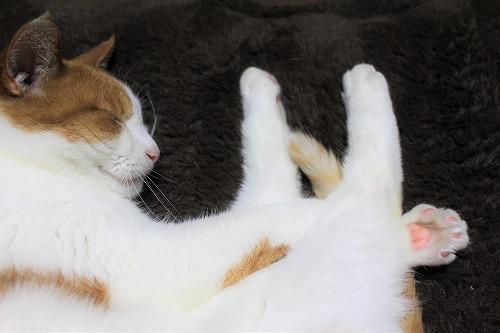 ブログNo.621(ペロペロしてる時の猫に指を出すとどうなる?)4