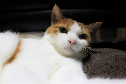 ブログNo.621(ペロペロしてる時の猫に指を出すとどうなる?)13