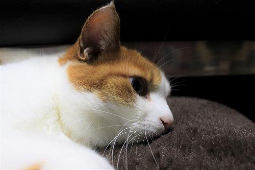 ブログNo.621(ペロペロしてる時の猫に指を出すとどうなる?)15