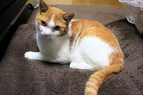 ブログNo.621(ペロペロしてる時の猫に指を出すとどうなる?)16