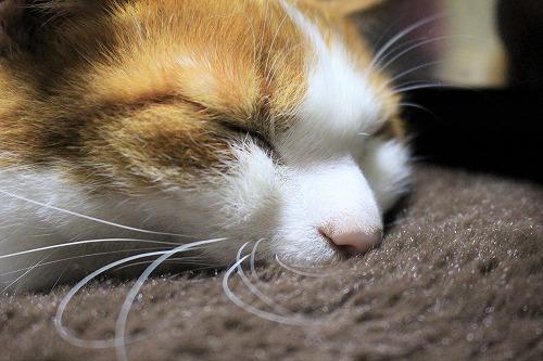 ブログNo.621(ペロペロしてる時の猫に指を出すとどうなる?)19