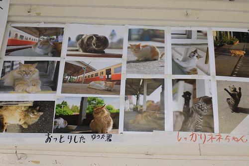 ブログNo.625(続)小湊鉄道の猫1