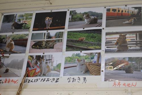 ブログNo.625(続)小湊鉄道の猫2