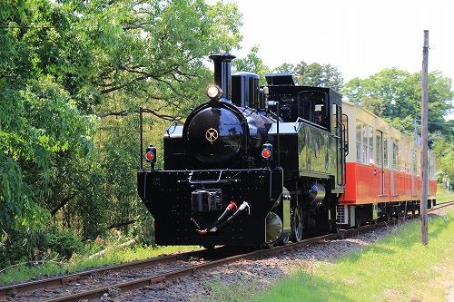 ブログNo.625(続)小湊鉄道の猫26
