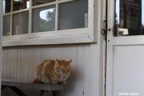 ブログNo.625(続)小湊鉄道の猫13