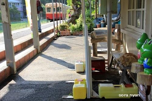 ブログNo.625(続)小湊鉄道の猫14