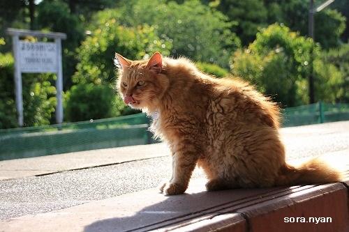 ブログNo.625(続)小湊鉄道の猫16