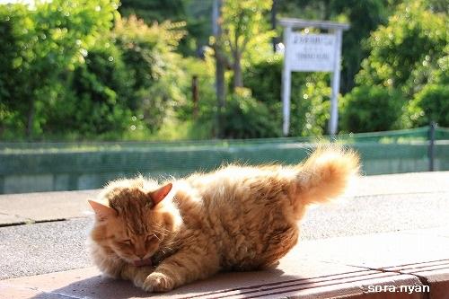 ブログNo.625(続)小湊鉄道の猫18
