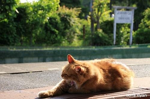 ブログNo.625(続)小湊鉄道の猫19