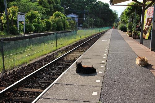 ブログNo.624(小湊鉄道の猫)4