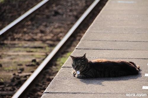 ブログNo.625(続)小湊鉄道の猫20