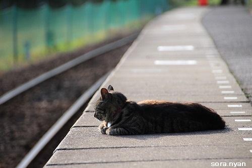 ブログNo.625(続)小湊鉄道の猫21