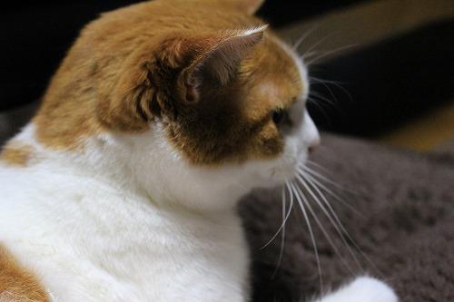 ブログNo.625(続)小湊鉄道の猫25