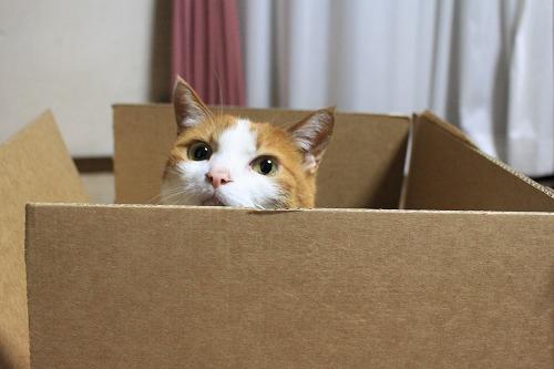 ブログNo.627【短編】猫様はやっぱり段ボール箱がお好き♪1