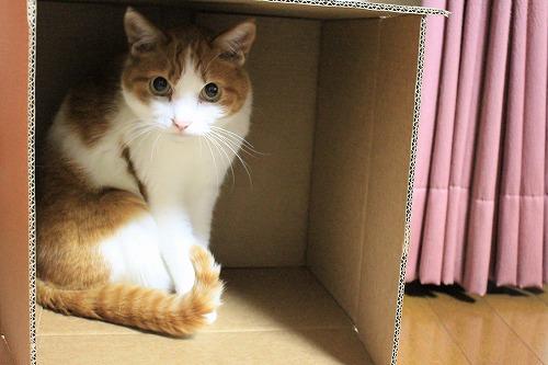 ブログNo.627【短編】猫様はやっぱり段ボール箱がお好き♪4
