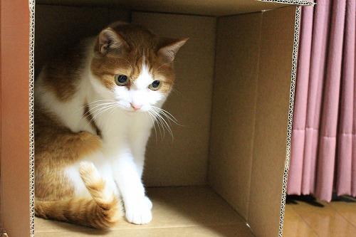 ブログNo.627【短編】猫様はやっぱり段ボール箱がお好き♪5