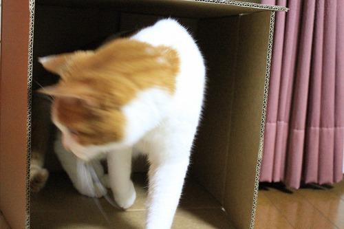 ブログNo.627【短編】猫様はやっぱり段ボール箱がお好き♪6