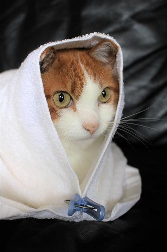 ブログNo.634映画「世界から猫が消えたなら」のキャベツ巻き。1