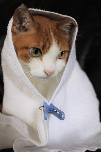 ブログNo.634映画「世界から猫が消えたなら」のキャベツ巻き。2