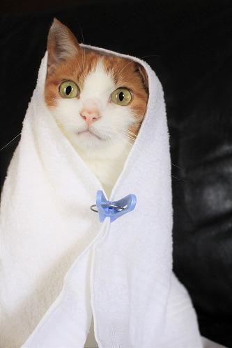 ブログNo.634映画「世界から猫が消えたなら」のキャベツ巻き。3