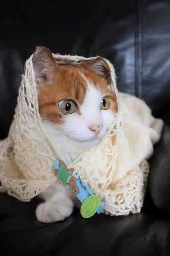 ブログNo.634映画「世界から猫が消えたなら」のキャベツ巻き。5