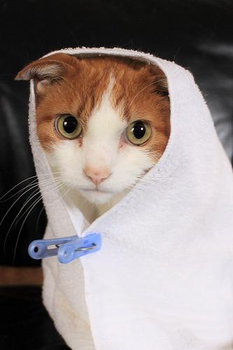 ブログNo.634映画「世界から猫が消えたなら」のキャベツ巻き。9
