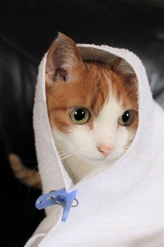 ブログNo.634映画「世界から猫が消えたなら」のキャベツ巻き。10