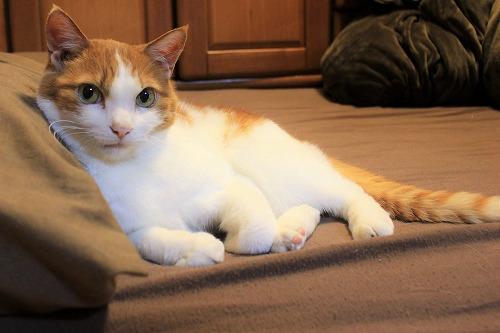 ブログNo.642【短編】待ち猫4