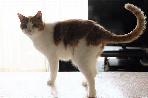 ブログNo.649(猫の形のお皿とムフフな物♪)6