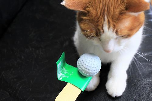 ブログNo.649(猫の形のお皿とムフフな物♪)8
