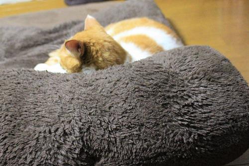 ブログNo.652(寝てるだけなのに面白いし可愛い♡)3