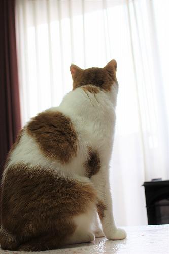 ブログNo.654(カラスとネコ)3