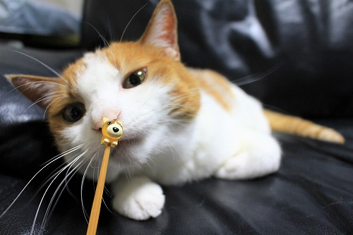 ブログNo.658(耳かきと猫)11