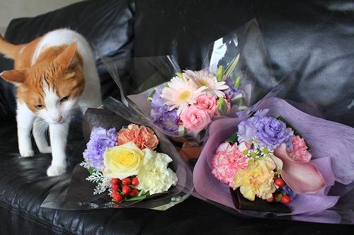 ブログNo.675(美味しそうなお花)3