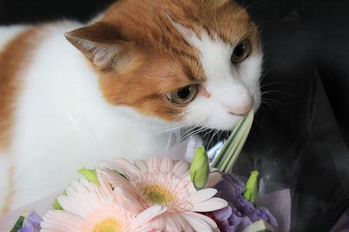 ブログNo.675(美味しそうなお花)5