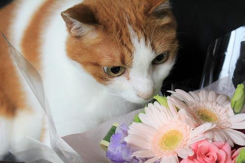 ブログNo.675(美味しそうなお花)6