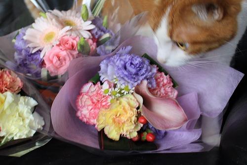 ブログNo.675(美味しそうなお花)8