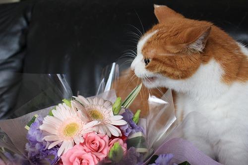 ブログNo.675(美味しそうなお花)10