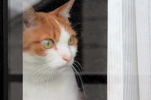 ブログNo.688(出窓猫、続き)4